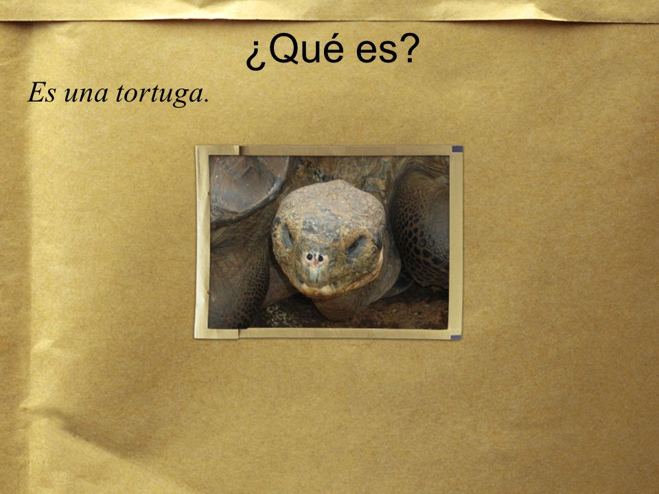 ¿Qué es Es una tortuga.