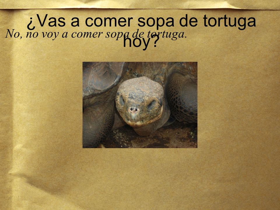 ¿Vas a comer sopa de tortuga hoy