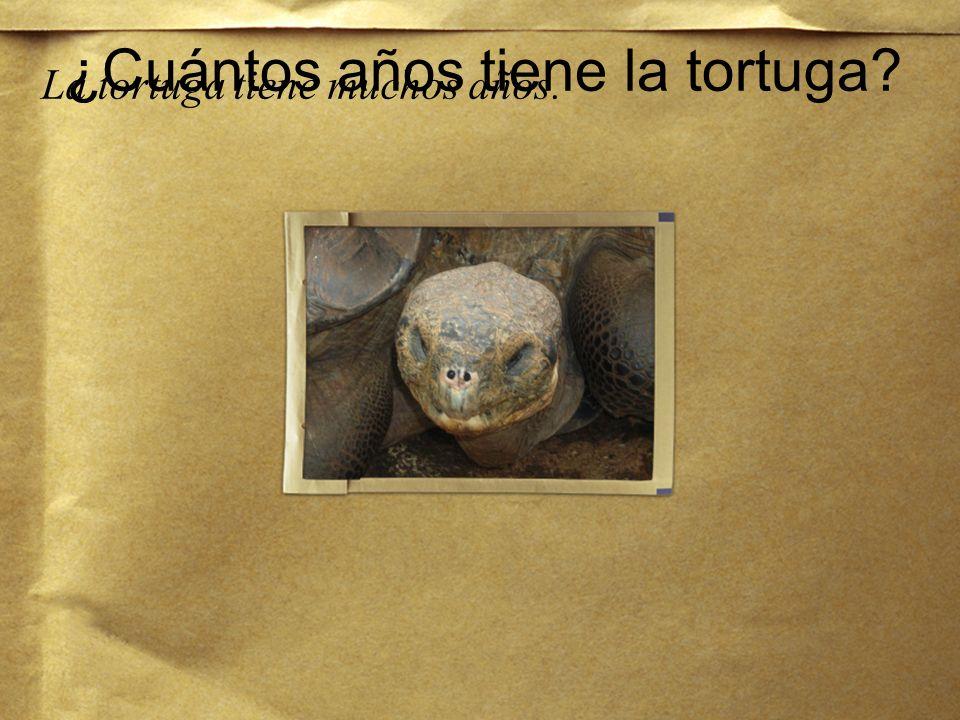 ¿Cuántos años tiene la tortuga