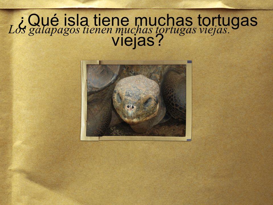 ¿Qué isla tiene muchas tortugas viejas