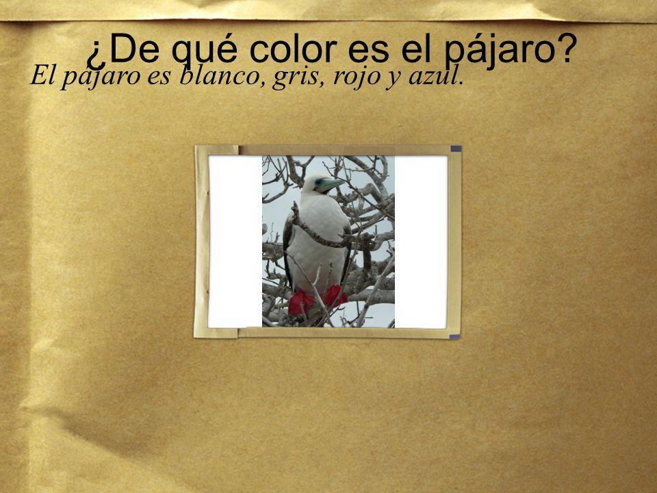 ¿De qué color es el pájaro