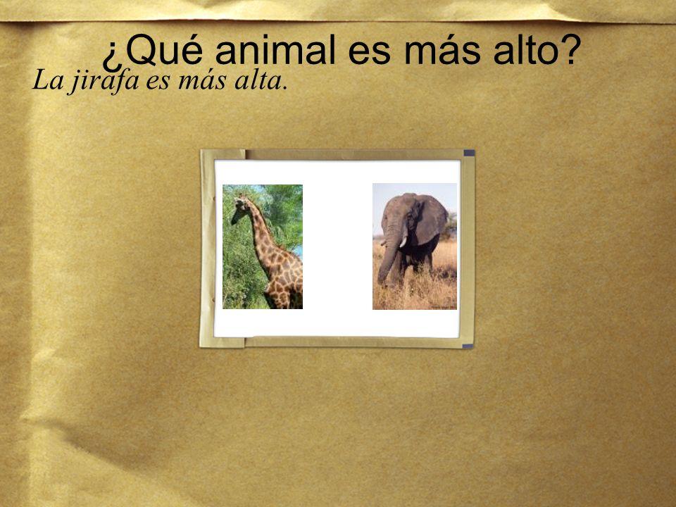 ¿Qué animal es más alto La jirafa es más alta.