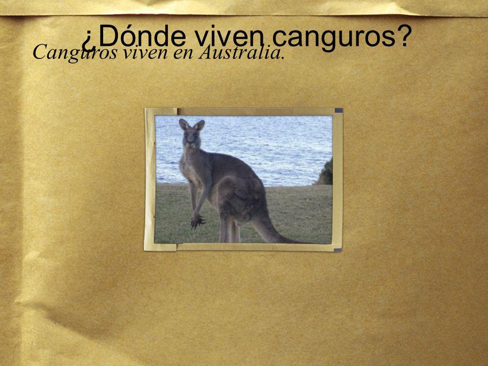 Canguros viven en Australia.