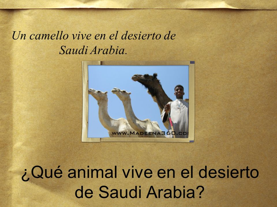 ¿Qué animal vive en el desierto de Saudi Arabia