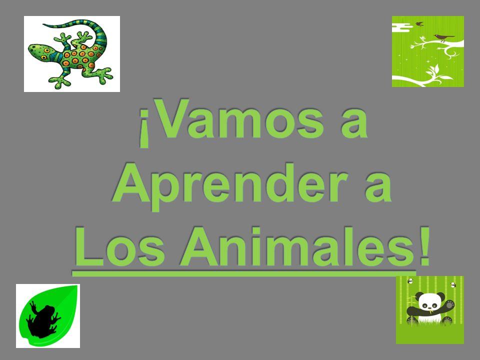 ¡Vamos a Aprender a Los Animales!