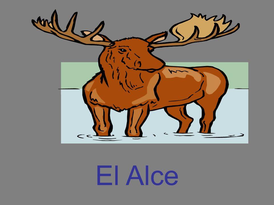 El Alce