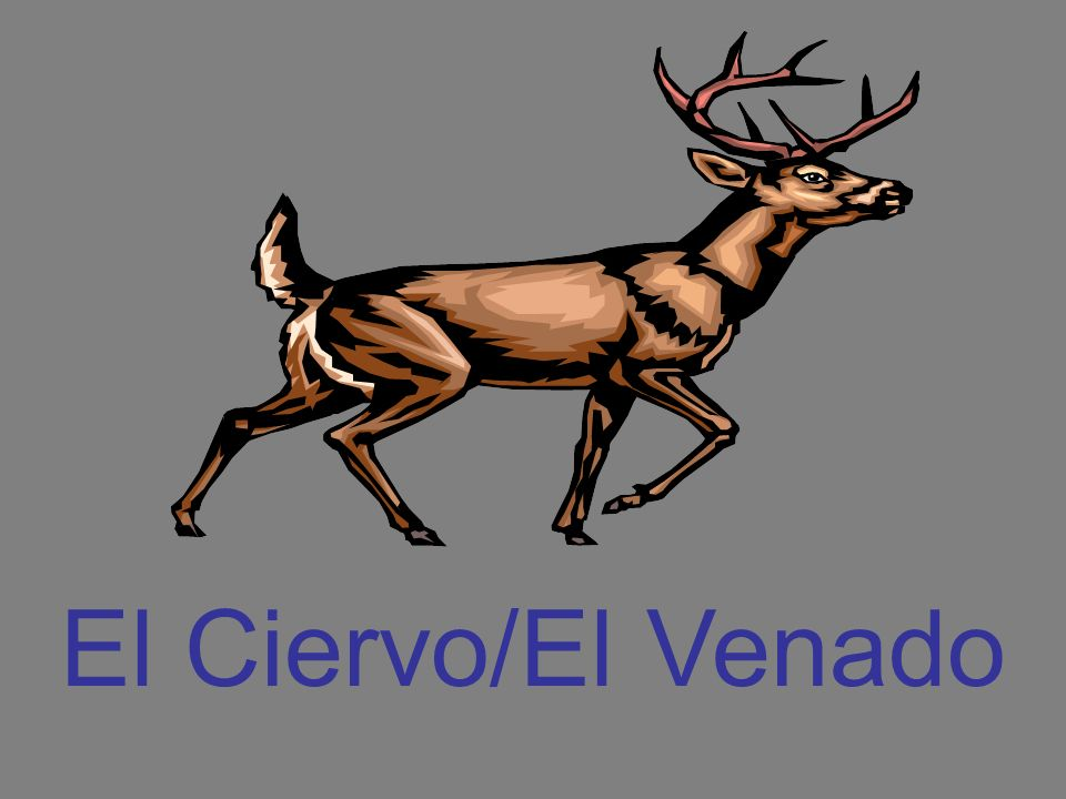 El Ciervo/El Venado