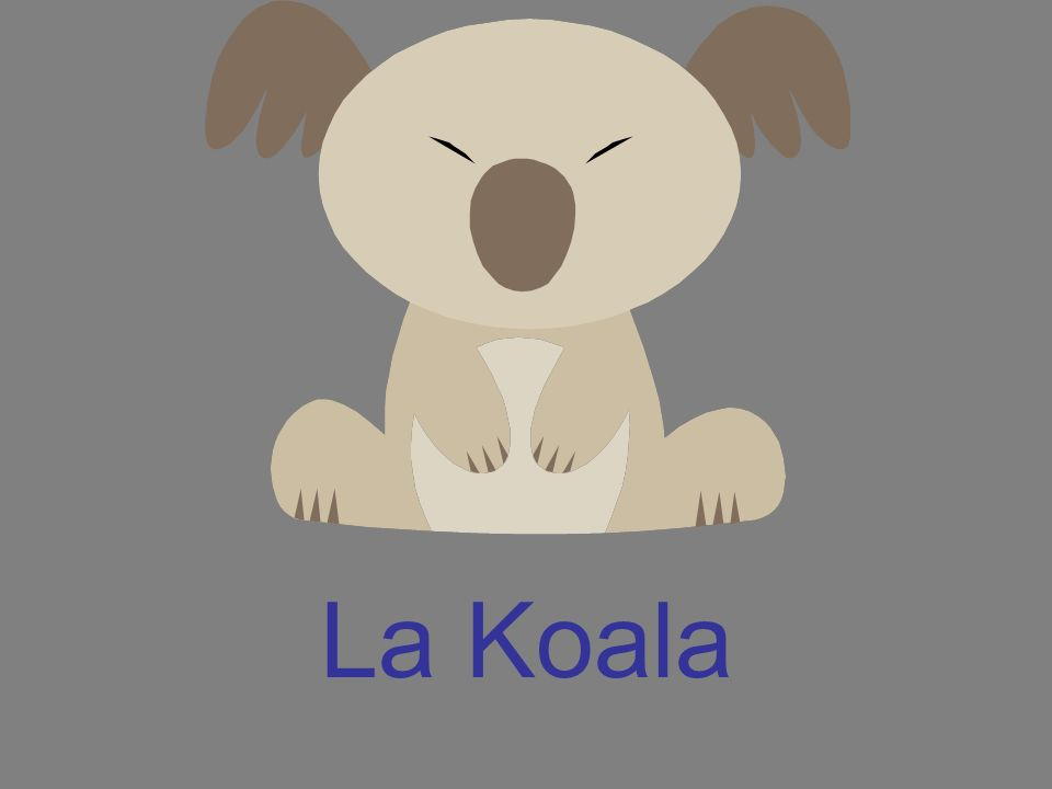 La Koala