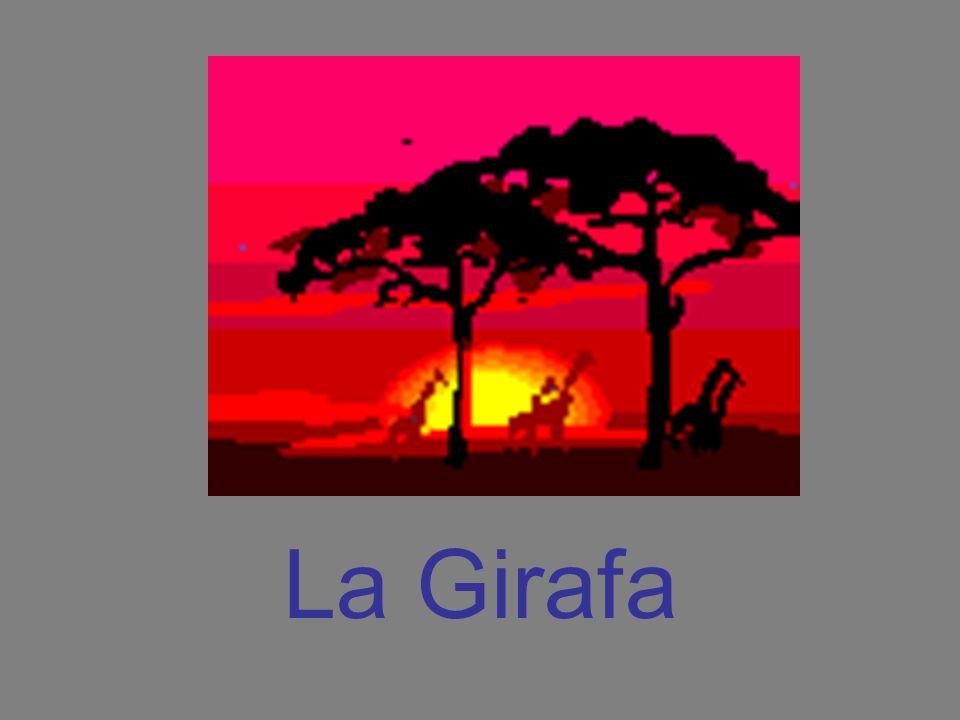La Girafa
