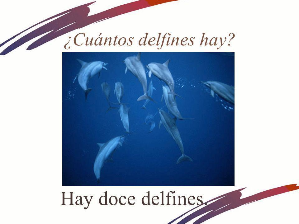 ¿Cuántos delfines hay Hay doce delfines.