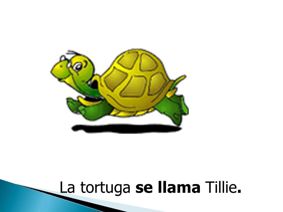 La tortuga se llama Tillie.