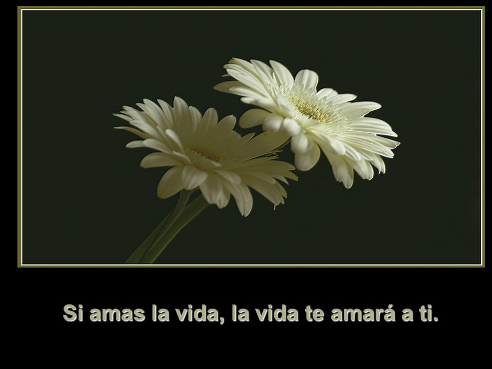 Si amas la vida, la vida te amará a ti.
