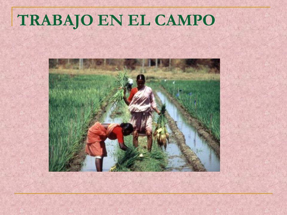 TRABAJO EN EL CAMPO