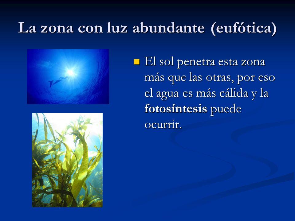 La zona con luz abundante (eufótica)