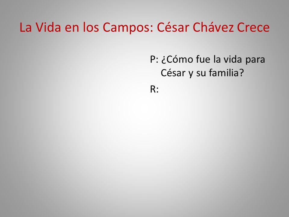 La Vida en los Campos: César Chávez Crece