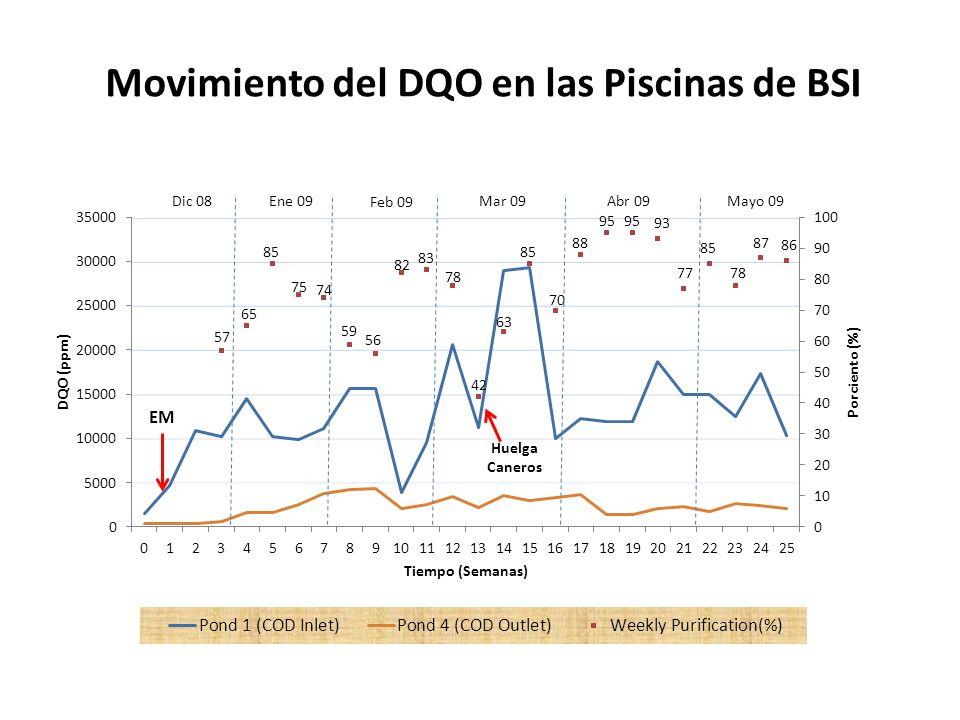 Movimiento del DQO en las Piscinas de BSI
