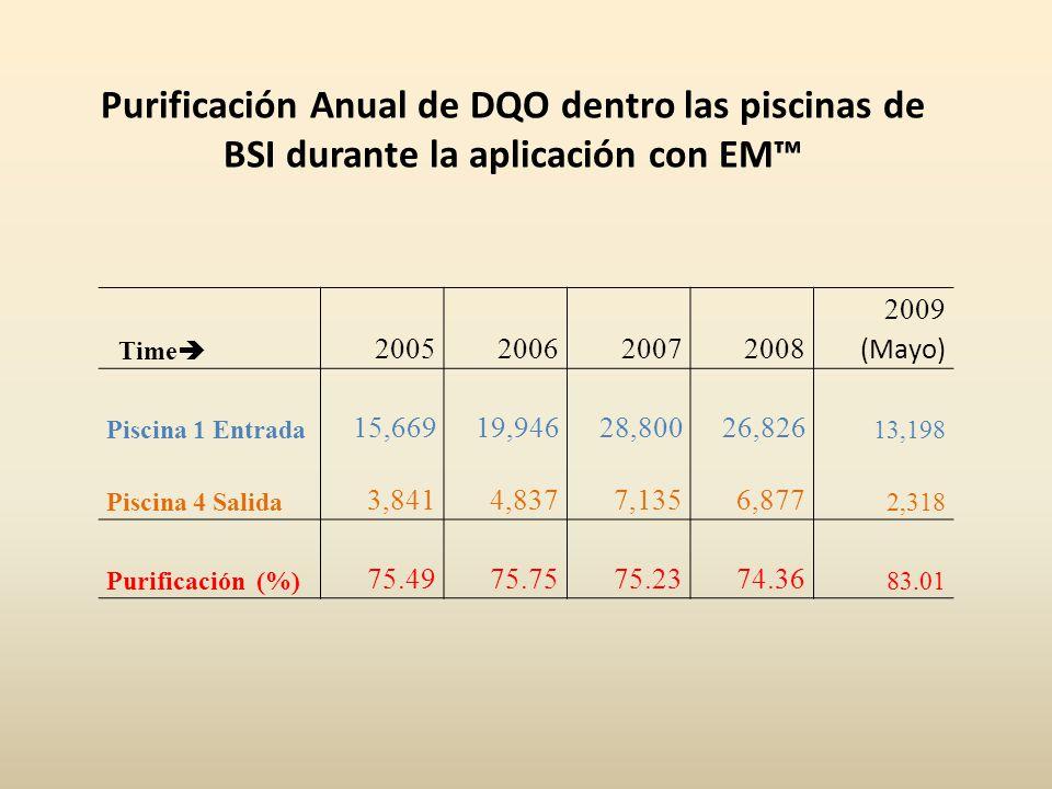 Purificación Anual de DQO dentro las piscinas de BSI durante la aplicación con EM™