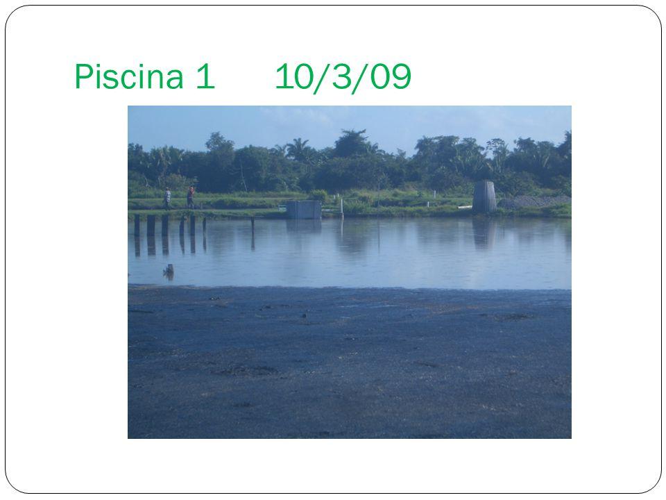 Piscina 1 10/3/09