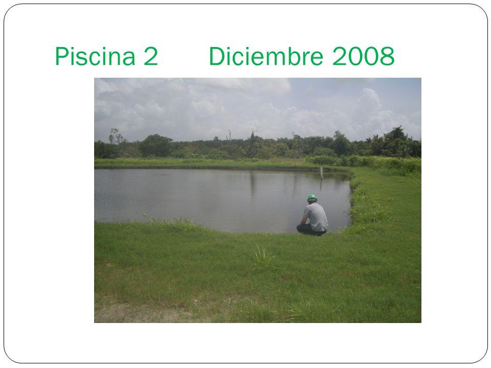 Piscina 2 Diciembre 2008