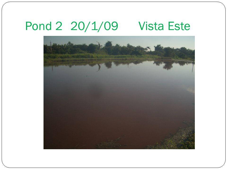 Pond 2 20/1/09 Vista Este