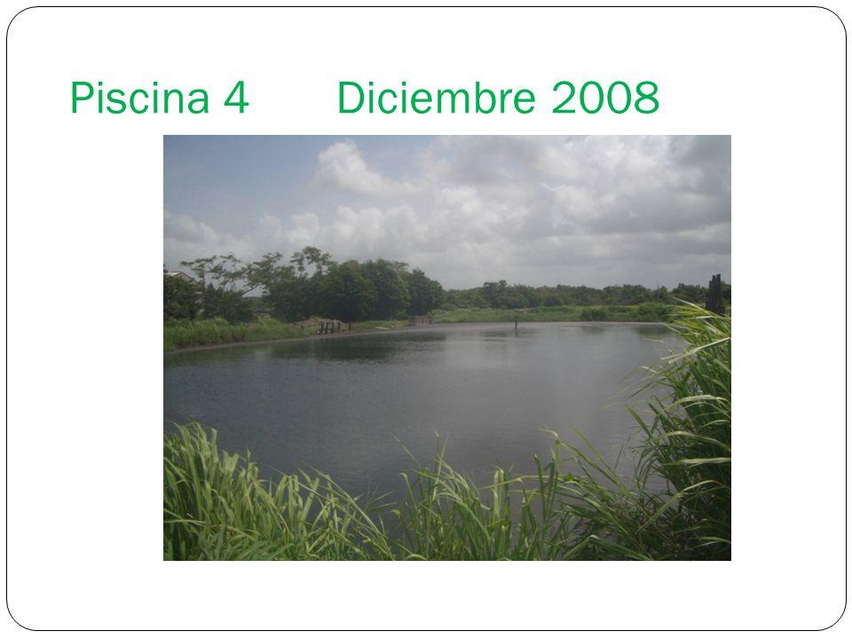 Piscina 4 Diciembre 2008