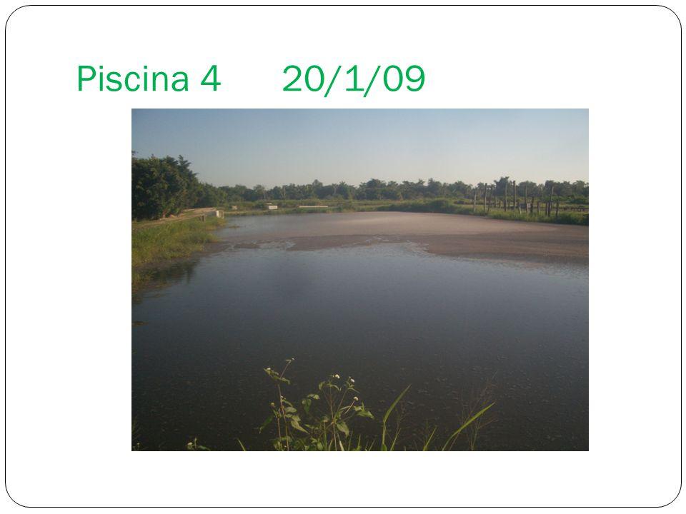 El uso de la tecnolog a microorganismos eficaces em en for Piscina 1 20