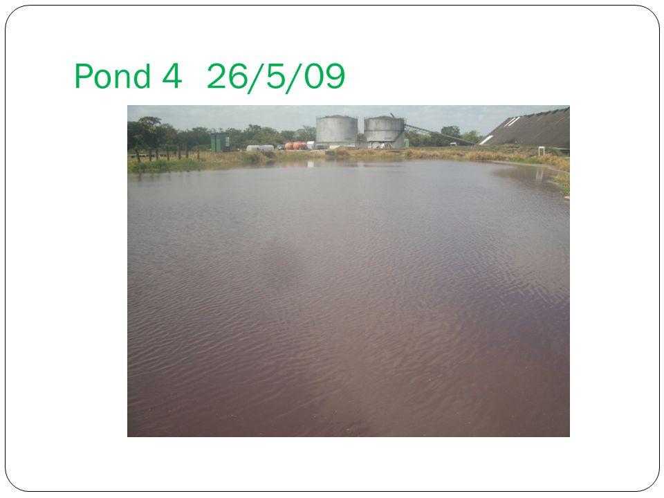 Pond 4 26/5/09
