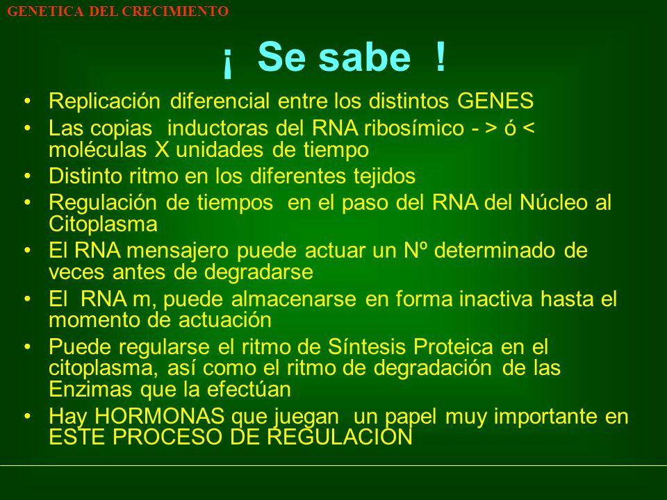 ¡ Se sabe ! Replicación diferencial entre los distintos GENES
