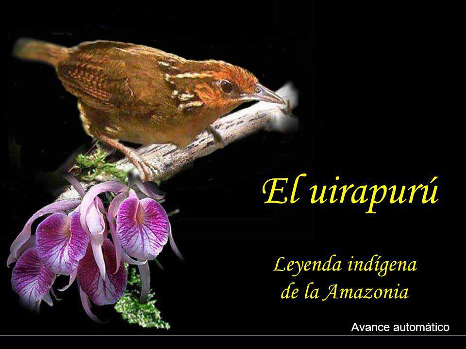 El uirapurú Leyenda indígena de la Amazonia Avance automático