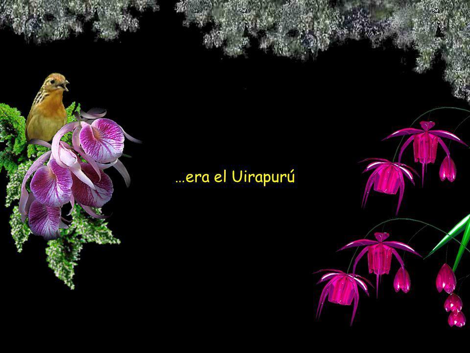 …era el Uirapurú