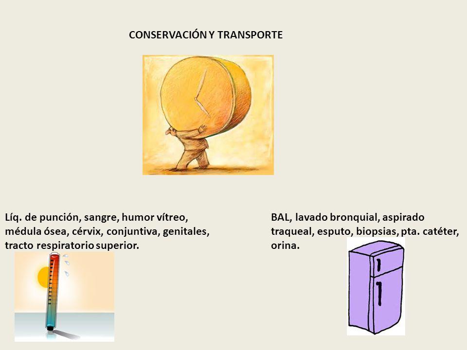 CONSERVACIÓN Y TRANSPORTE