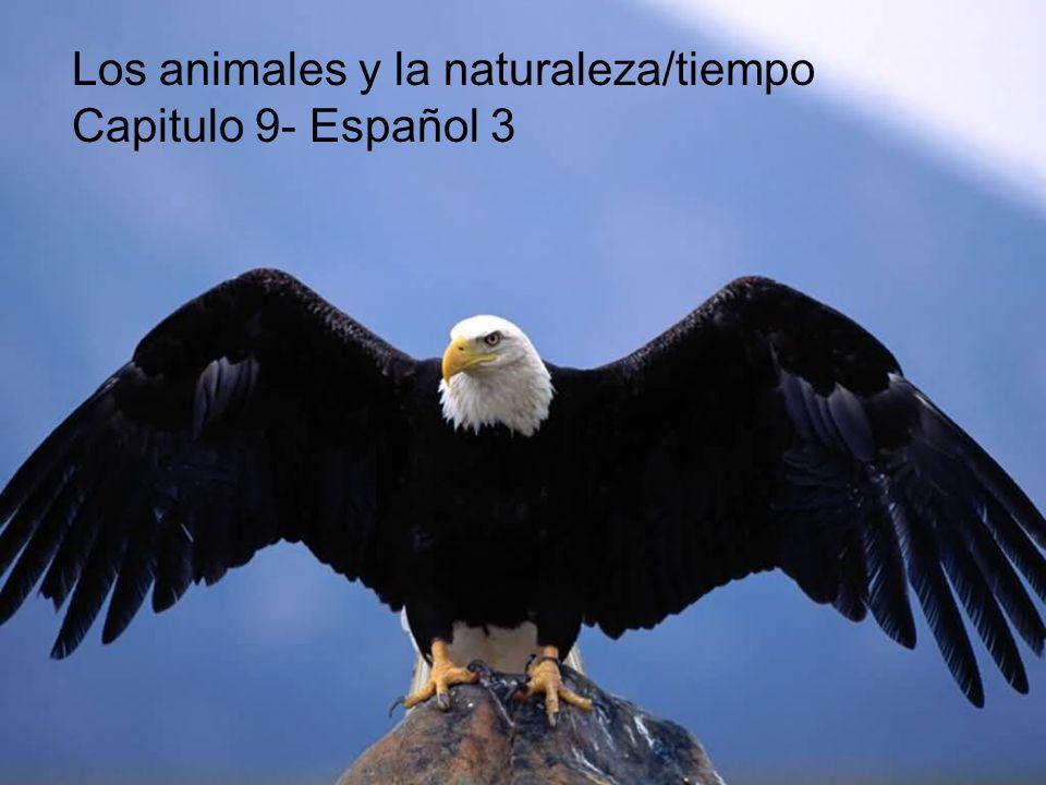 Los animales y la naturaleza/tiempo