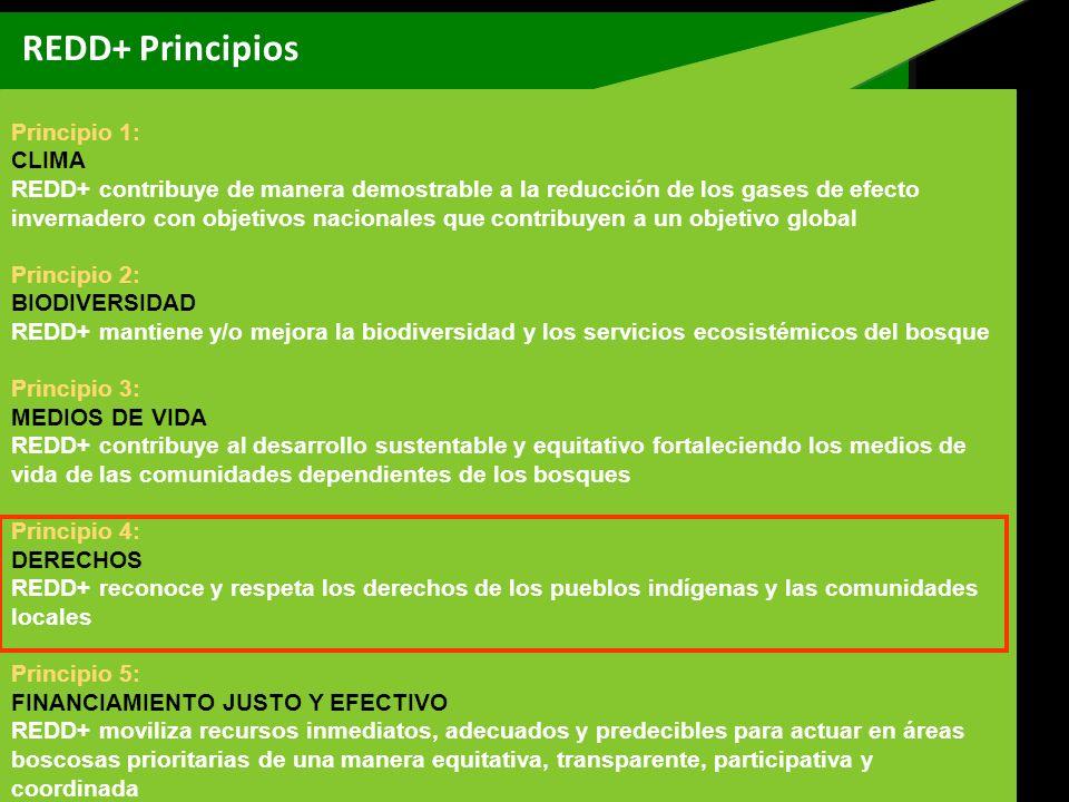REDD+ Principios Principio 1: CLIMA
