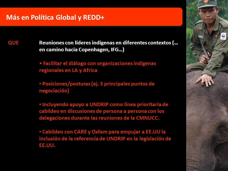 Más en Política Global y REDD+