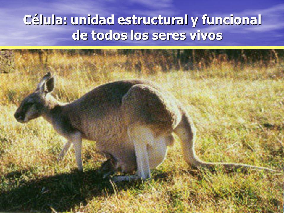 Célula: unidad estructural y funcional de todos los seres vivos