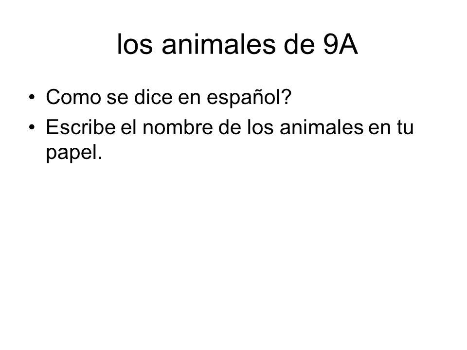 los animales de 9A Como se dice en español