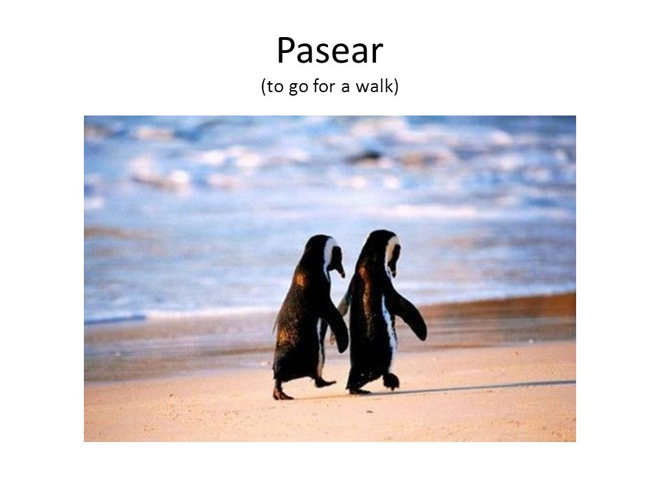 Pasear (to go for a walk)