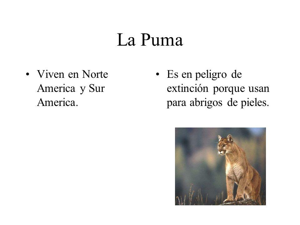 La Puma Viven en Norte America y Sur America.