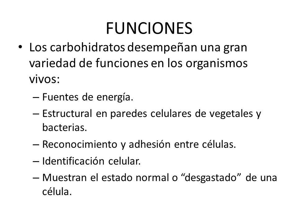 FUNCIONES Los carbohidratos desempeñan una gran variedad de funciones en los organismos vivos: Fuentes de energía.