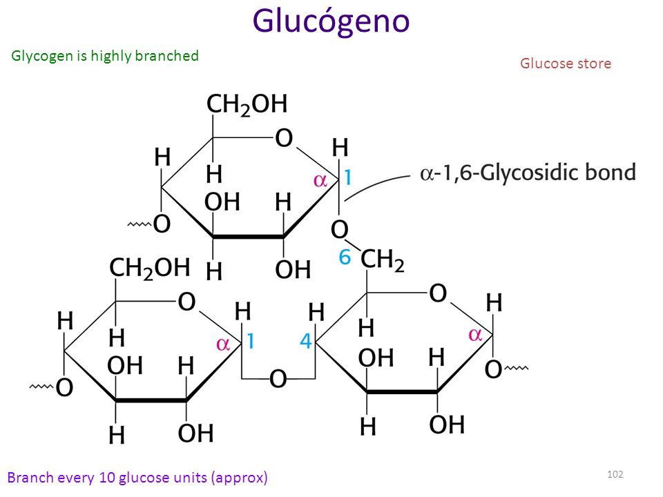 Glucógeno Glycogen is highly branched Glucose store