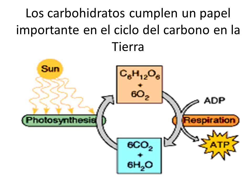 Los carbohidratos cumplen un papel importante en el ciclo del carbono en la Tierra