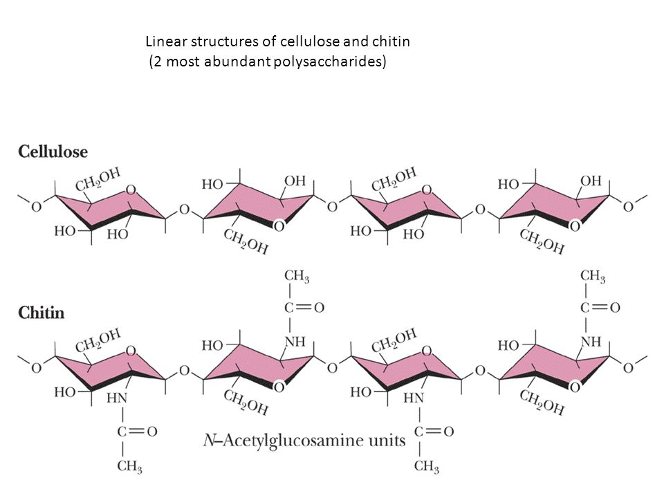 Linear structures of cellulose and chitin