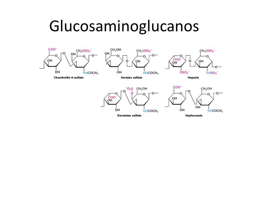 Glucosaminoglucanos