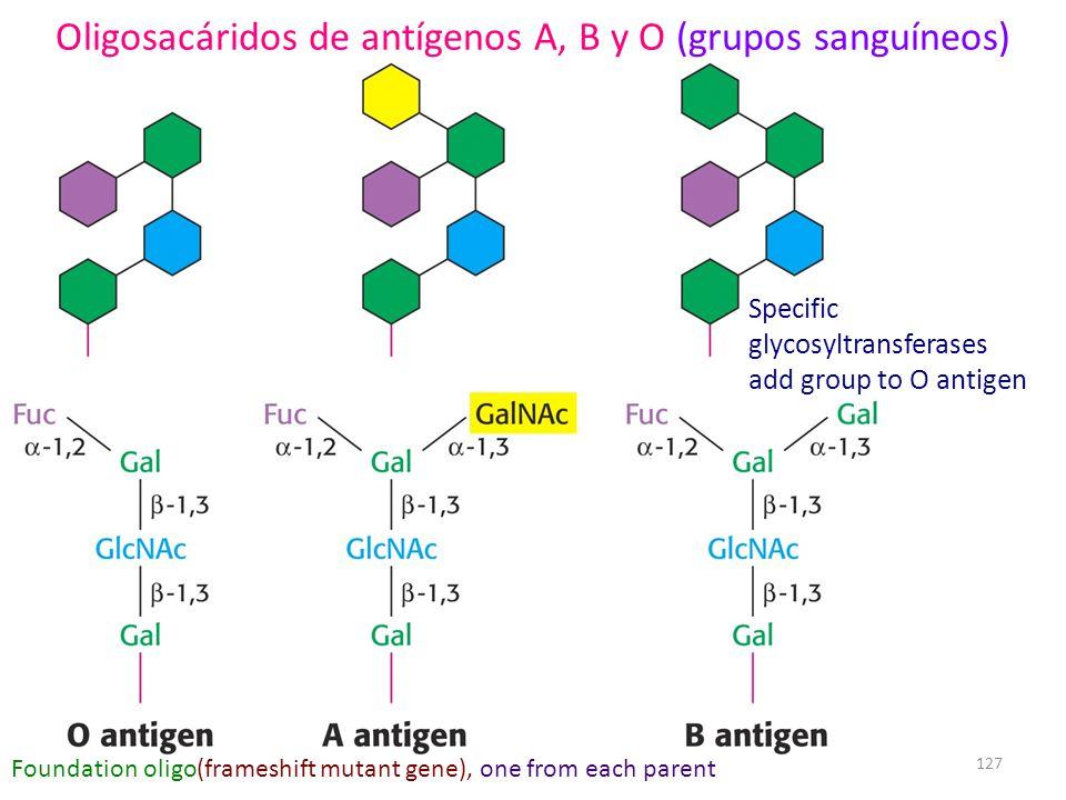 Oligosacáridos de antígenos A, B y O (grupos sanguíneos)