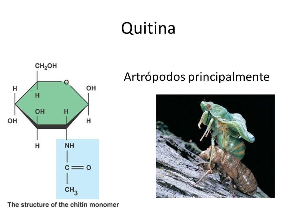 Artrópodos principalmente
