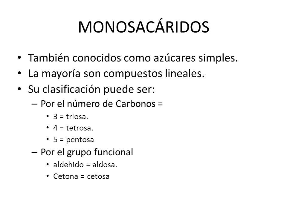 MONOSACÁRIDOS También conocidos como azúcares simples.