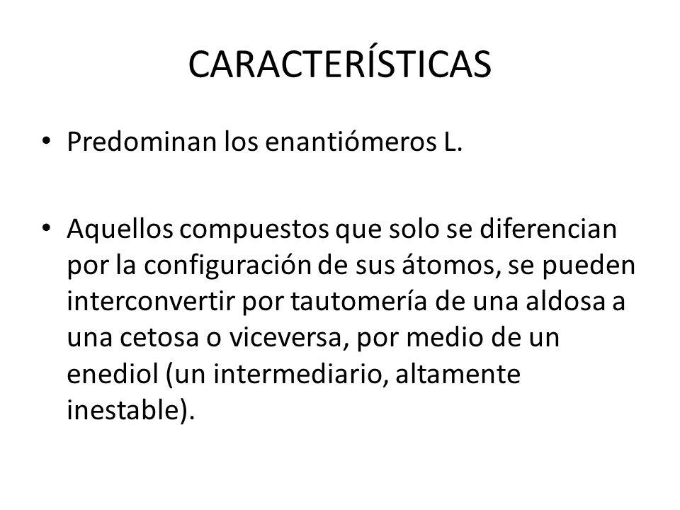 CARACTERÍSTICAS Predominan los enantiómeros L.