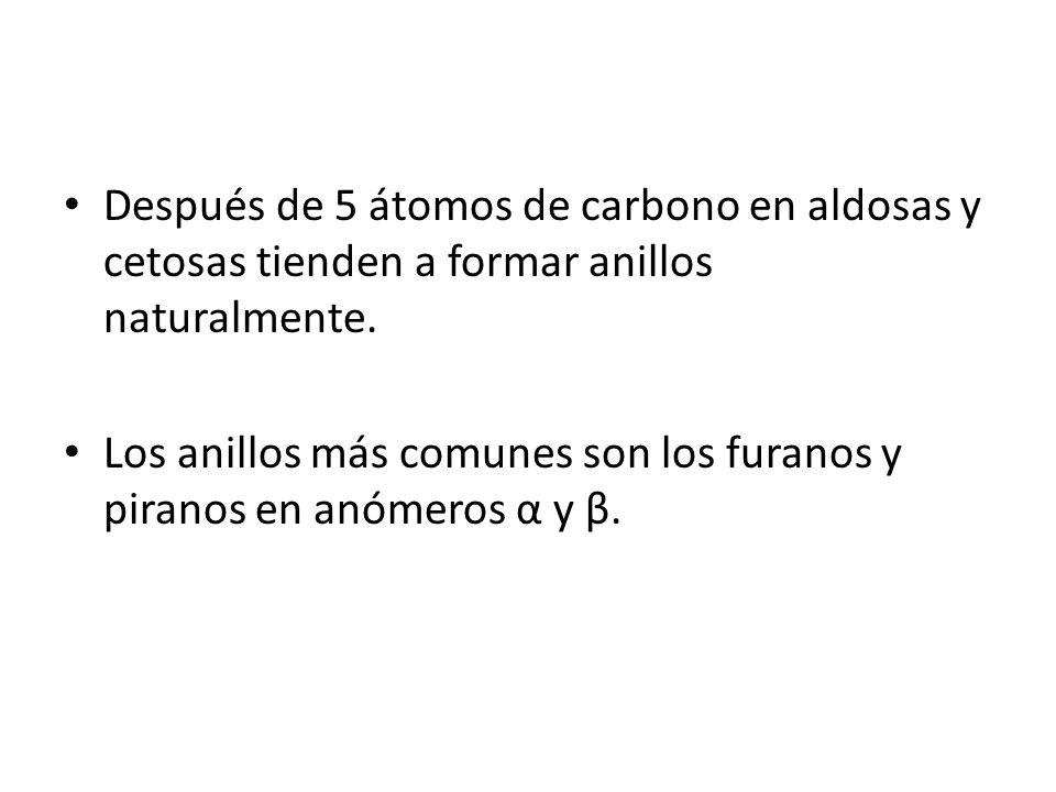 Después de 5 átomos de carbono en aldosas y cetosas tienden a formar anillos naturalmente.