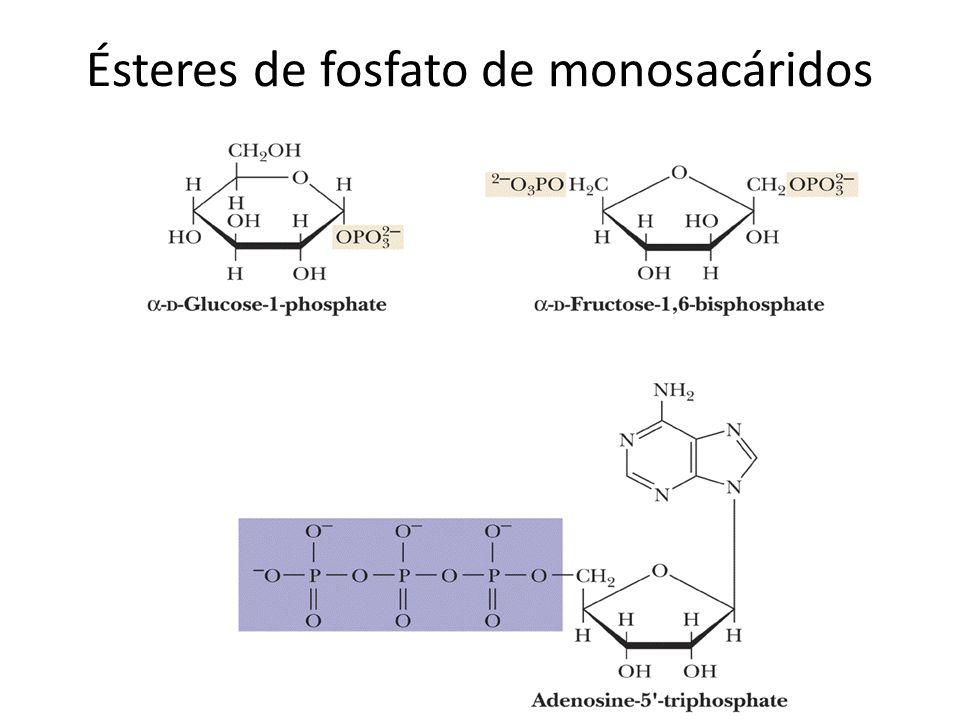 Ésteres de fosfato de monosacáridos