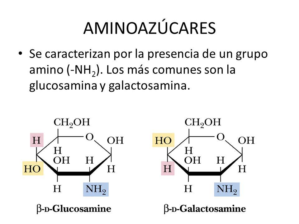 AMINOAZÚCARES Se caracterizan por la presencia de un grupo amino (-NH2).